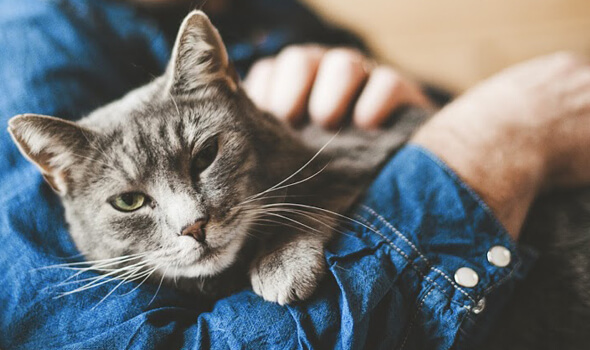 Preventative-Care-for-Cats