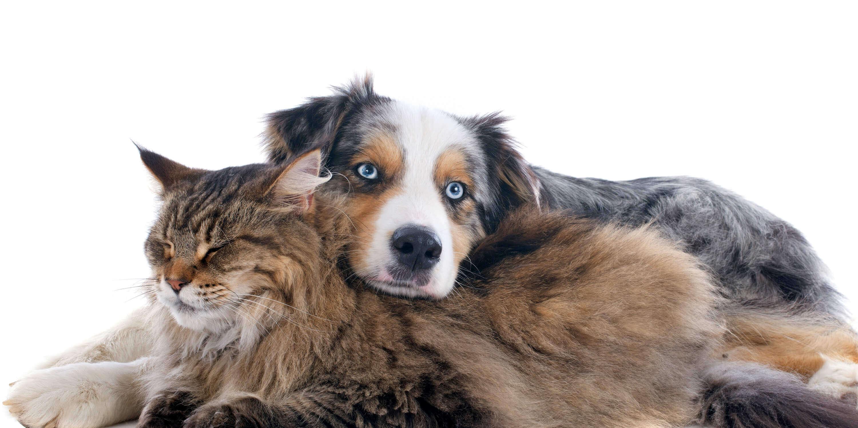 bramer animal hospital cat dog wellness services