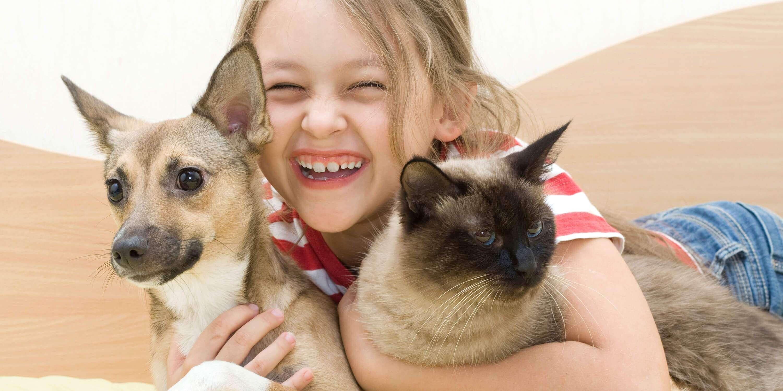 bramer animal hospital dog cat wellness services