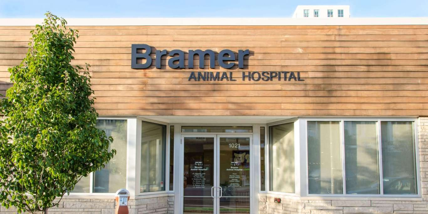 bramer animal hospital full service veterinary