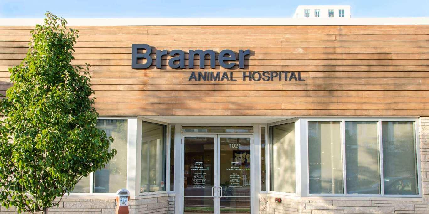 bramer animal hospital full service veterinary