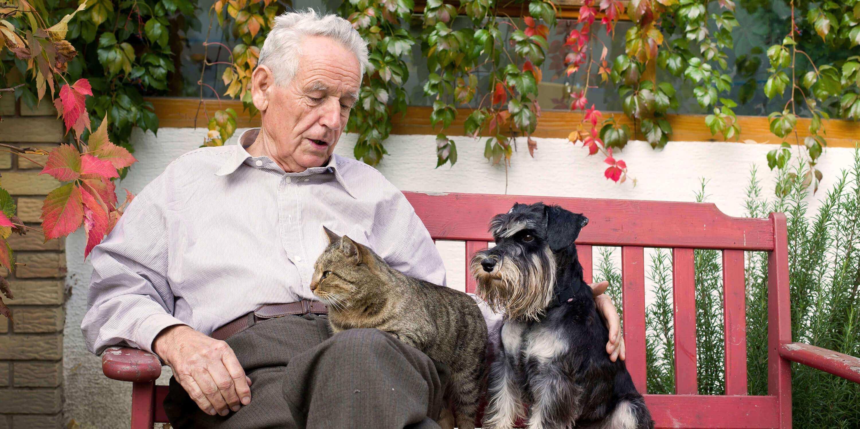 bramer animal hospital senior pet care