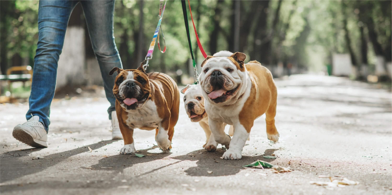 Walking Dogs in Evanston, IL