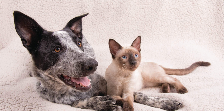Bramer Animal Hospital Cat & Dog