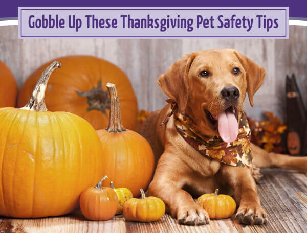 Gobble Up These Thanksgiving Pet Safety Tips