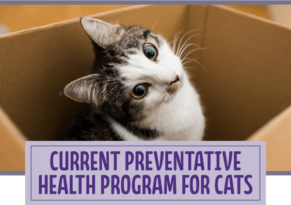Current preventative health program for cats
